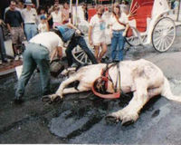 Save NYC's Carriage Horses