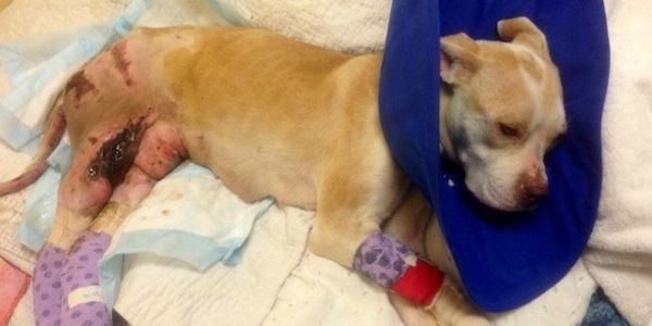 Demand South Carolina Charge Man Who Dragged Dog With Felony Animal Cruelty