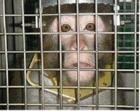 Retire Harvard's Research Primates to a Sanctuary