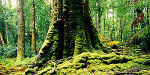 Keep Tasmania's Old Growth & High Conservation Value Forests on the UNESCO World Heritage List