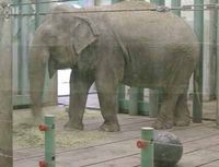 Send Lucy to the Tennesse Elephant sanctuary