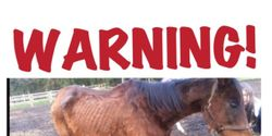 justice for misstreated horses , lets put a stop to neglect and put a ban to these people owning and