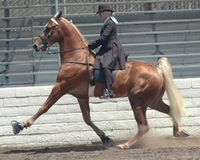 Ban Tennessee Walking Horses
