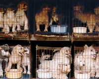 You can be a savior. Help stop the puppy mills