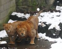 Prevent Animal Abuse in Chinese Zoo