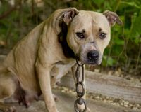 Tell Iowa Rep. Steve King to Stop Opposing Animal Protection