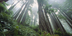 Help save the forests of Tasmania from destruction