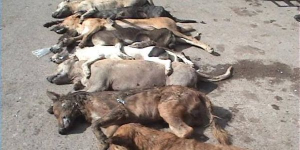 STOP KILLING STRAY DOGS IN SAN BLAS, NAYARIT