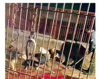 STOP the slaughter house in JiLin, China - Dog Meat Trade
