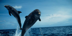 Freedom for dolphins and whales 2014~~ 29 JUN