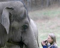 PLEASE Reunite Tarra the Elephant with her friend, Carol Buckley