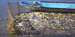 Tell Congress: Don't Allow Overfishing!