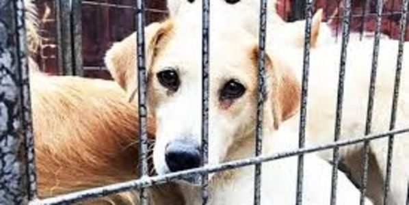 petition: Demand to STOP the sale of dogs and puppies on