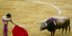 Thank Mayor in Columbia for Closing Bullring