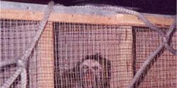 Tell Vietnam Airlines- Stop Transporting Research Primates