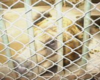 Help the animals in horrific conditions in Kunming zoo, China