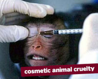 Stop Testing Botox on Animals