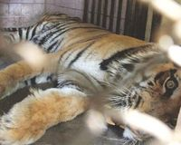 Tell Karachi Zoo to Move Animals to Sanctuary