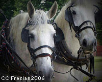 Help Eliminate Horse Drawn Carriages in Salt Lake City
