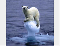 OBAMA- Protect Polar Bear Habitat!
