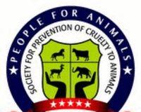 Contre la maltraitance sur les éléphants (INDE) !! 610777-1209126670-main