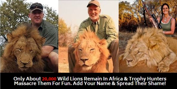 Trophy hunters posing with dead lions