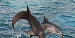 Stop the Town of Taiji From Opening a Marine Park