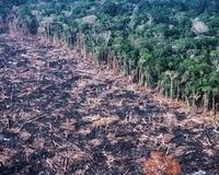Stop deforestation right now