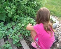 Save Rosie's Vegetable Garden