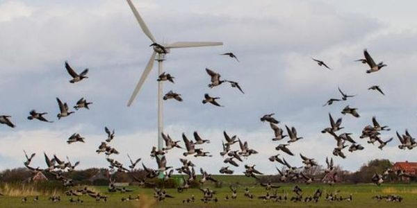 Ask Solar Plant; Stop Killing the Birds!