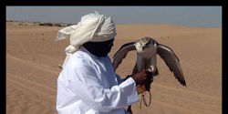 Stop the Killing of the Houbara Bustard By Hunters in Pakistan!