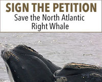 Protect the North Atlantic Right Whales