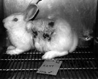 Require Avon, Mary Kay, Estée Lauder to make products 100% cruelty-free once again!