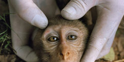 Stop Animal Experiments at Bristol-Myers