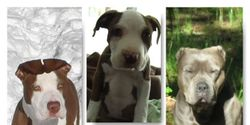 Prevent a discriminating ban against Pitbulls in Medford OR