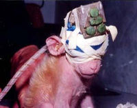 ANIMALS USED IN LABORATORY EXPERIMENTS