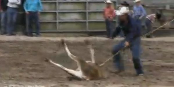 PLEASE BAN RODEOS IN NEW ZEALAND!