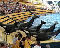 Free Orcas and Dolphins from Slavery in Tenerife