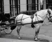 Ban Horse-Drawn Carriages in Chicago