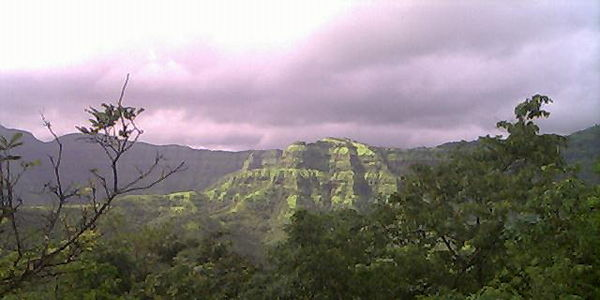 STOP THE DEFORESTATION IN SAHYADRI FORESTS