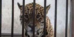 BAN PRIVATE OWNERSHIP OF EXOTIC ANIMALS