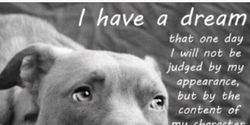 Remove Pit Bull Prohibition in Gallipolis