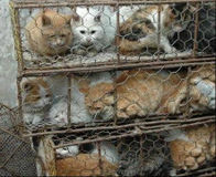 Tell S. Korea to Stop Boiling Cats and Dogs Alive