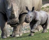 Stop Hunting Endangered White Rhinos