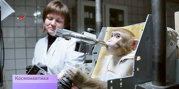 Save Four Endangered Monkeys From Being Forced To Die on Mars