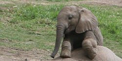 Stop Slaughtering Elephants!