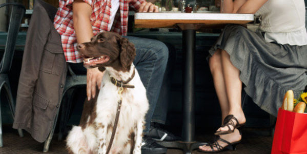Let Californians Dine With Their Dogs!