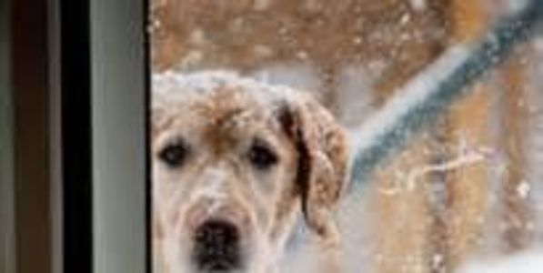 DO NOT leave your pets out in the cold/heat!