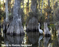 Tell Tallahassee to Restore Funding to Protect the Florida Everglades