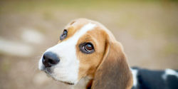 Stop UK Lab's Puppy and Kitten Experiments!